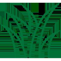 Lawn Care Icon