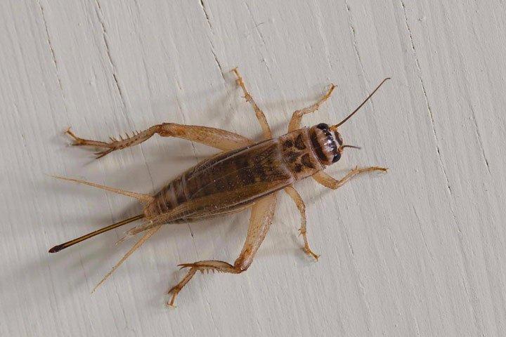 Crickets, Pillbugs, & Silverfish