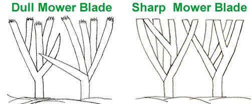 Dull Mower Blade Grass Graphic