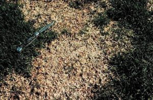 Snow Mold Grey