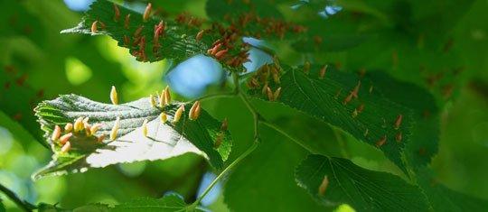 Bugs on Leaves