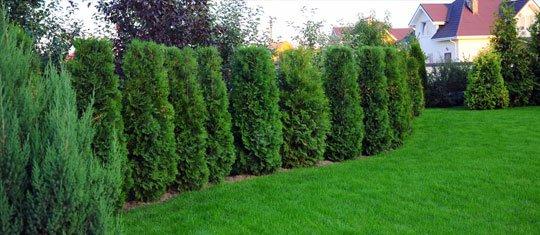 Health Tree Row