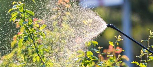Spraying Oils on Trees